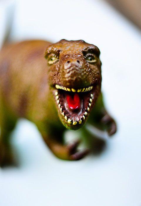 Mother rex