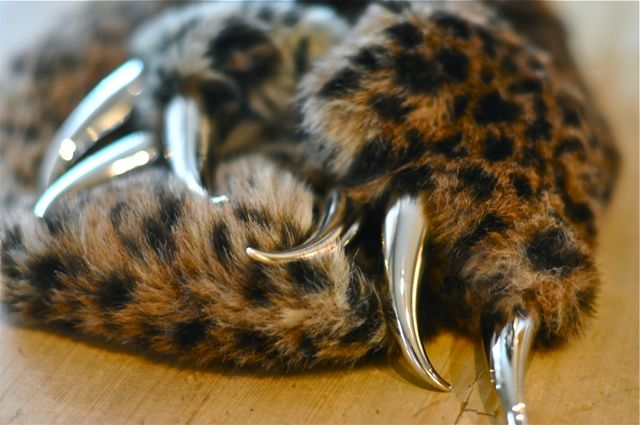 Cat claw close up